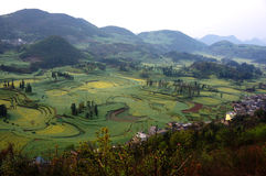 Circles of rape flowers field. Yunnan Luo Ping rape flowers like a beautiful picture Royalty Free Stock Images