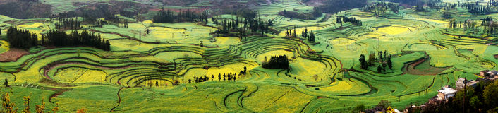 Circles of rape flowers field. Yunnan Luo Ping rape flowers like a beautiful picture Stock Photo