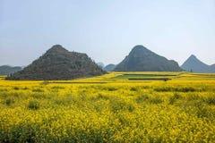 Yunnan Luoping canolablomma på en liten lapp av blommor Bazi Royaltyfri Fotografi