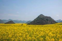Yunnan Luoping canolablomma på en liten lapp av blommor Bazi Royaltyfria Bilder