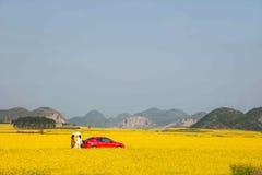 Yunnan Luoping canolablomma på en liten lapp av blommor Bazi Arkivfoton