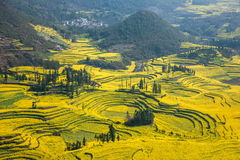 Yunnan Luoping County Niujie Township Camp foot screws terraced canola flower Royalty Free Stock Images