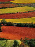 Yunnan red soil dry royalty free stock photography