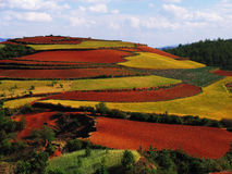 Yunnan red soil dry Stock Photo