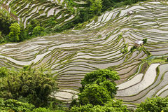 Yunnan Reispaddy Terracing Stockfotografie