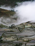 Yunnan rice-paddy terracing Royalty Free Stock Photography