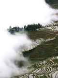Yunnan rice-paddy terracing Royalty Free Stock Photos