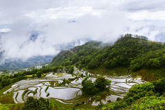 Yunnan rice-paddy terracing Stock Photography