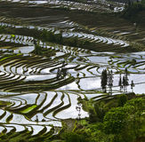 Yunnan rice-paddy terracing Stock Images