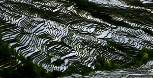 Yunnan rice-paddy terracing Royalty Free Stock Images