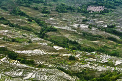 Yunnan rice-paddy terracing Royalty Free Stock Photos
