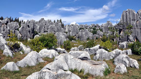 Yunnan Stone Forest Scenic Spot Royalty Free Stock Image
