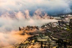 Yunnan Yuanyangtitian mehr durch Baumlandschaft Stockfotografie