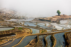 Yunnan Yuanyangtitian mehr durch Baumlandschaft Stockfoto