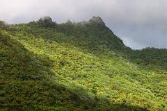yunque för el-skognational Royaltyfri Fotografi