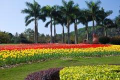 yunTai ogród Zdjęcie Royalty Free