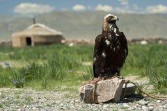 yurt和狩猎老鹰 免版税库存照片