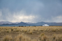 Yurt στο μογγολικό τοπίο Στοκ φωτογραφίες με δικαίωμα ελεύθερης χρήσης