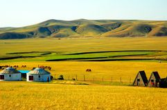 Yurt. House which Chinese the Mongols inhabits --Yurt Stock Images