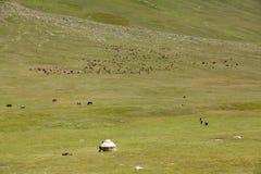 Yurt And Grazing Farm Animals Stock Photo