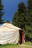 Yurt among firs Royalty Free Stock Image