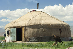 A yurt and a hunting eagle. Royalty Free Stock Images