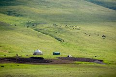 Yurt and livestock in Kyrgyzstan royalty free stock photo