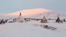 The yurt and reindeer in the evening , middle of tundra in Siberia. The yurt and reindeer in the evening , middle of tundra in Siberia stock video footage
