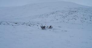 yurts夺取西伯利亚生活从寄生虫,阵营在驯鹿之外的和雪橇 影视素材