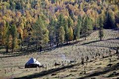 yurts пущи Стоковые Изображения