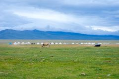 Yurts and cows by Song Kul lake, Kyrgyzstan. Central Asia Stock Photo