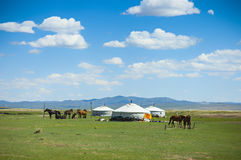 Yurts und Pferde in Mongolei stockfotografie