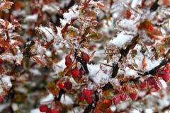 yushan国家公园植物  免版税库存图片