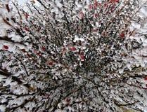 yushan国家公园植物  库存照片