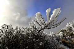 yushan国家公园植物  免版税图库摄影