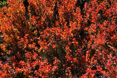 yushan国家公园植物  库存图片