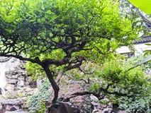 Yuyuan ogród przy Szanghaj, Chiny zdjęcia stock