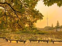 Yuyuantan park. Park yuyuantan sunset fall colors colorful love cool fun trees beautiful great life walk photo Stock Photo