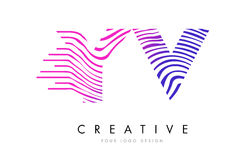 YV Y V Zebra Lines Letter Logo Design with Magenta Colors Stock Photography