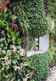 Żywa perennial ściana Zdjęcie Royalty Free