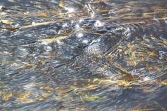 Żywa woda 1 Obrazy Stock