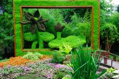 Żywej rośliny obrazek Fotografia Stock