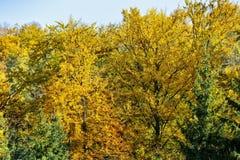 Żywi jesieni drzewa Obrazy Royalty Free
