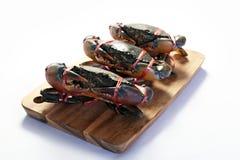 Żywi kraby Fotografia Stock
