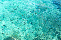 Żywieniowa ryba w morzu Obrazy Stock