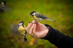 Karmić ptaki obrazy stock