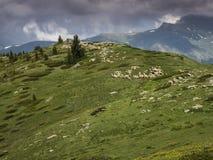 żywieniowi trawy stada cakle Zdjęcie Royalty Free