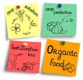 Żywność organiczna najwięcej ważnych czynników ilustracyjnych Obrazy Royalty Free