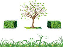 Żywopłoty, Dzika trawa i drzewo, Zdjęcia Royalty Free