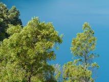 Żywy błękit błękitny jezioro Obraz Royalty Free